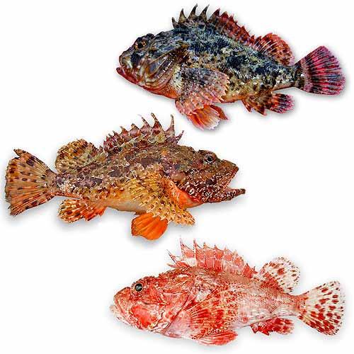 pasta fresca ripiena di pesce