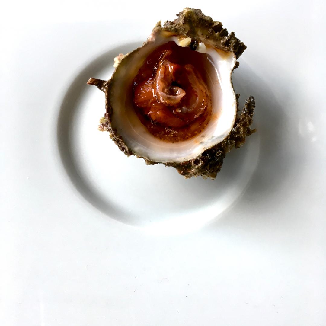 ostrica rossa gallipoli