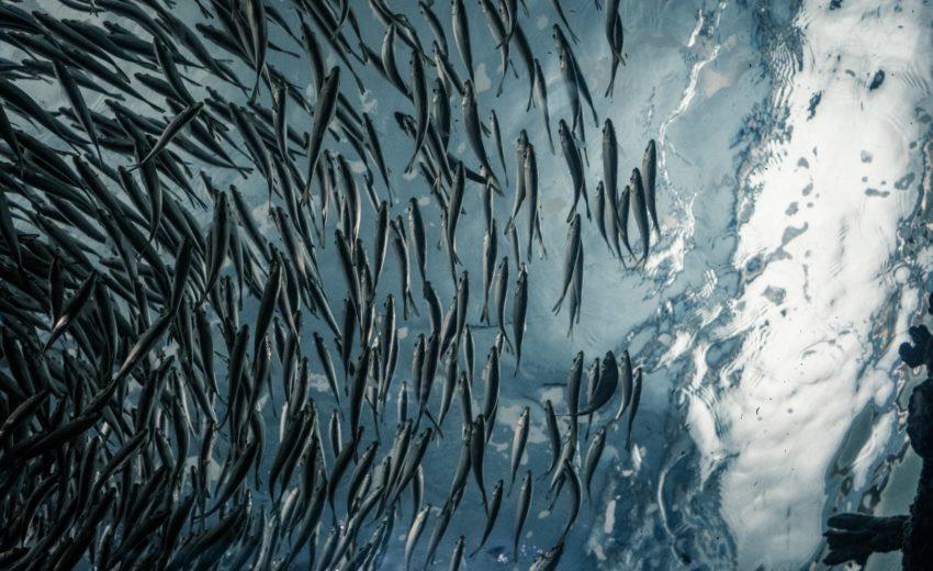 prodotti ittici da pesca sostenibile MSC